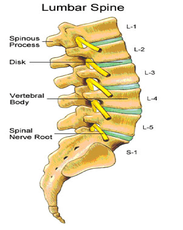 Lumbar-spine-anatomy-physical-therapy