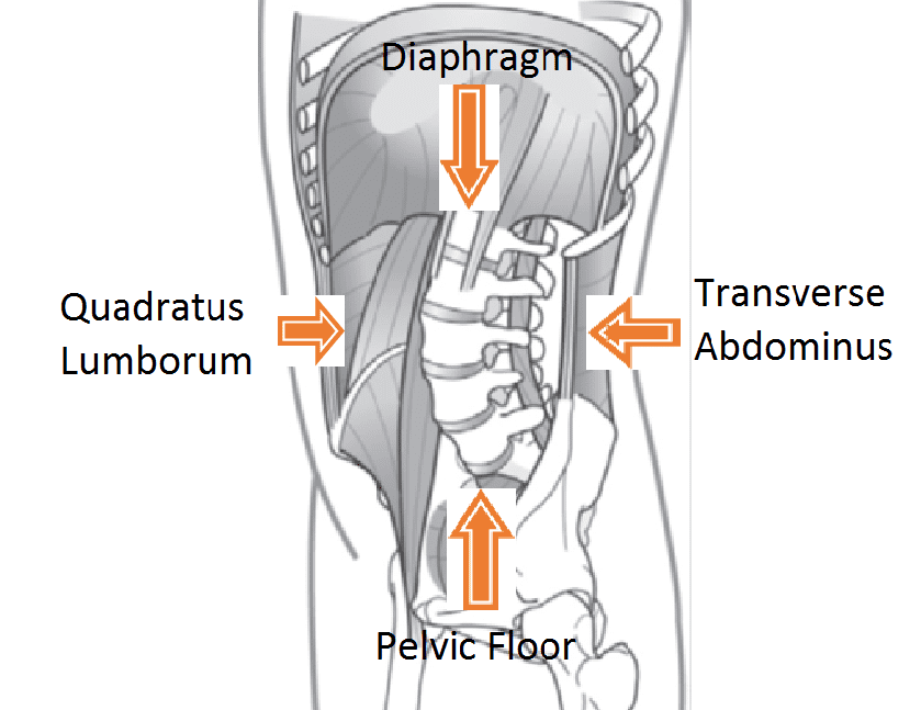 Pelvic-floor-back-pain-physical-therapy