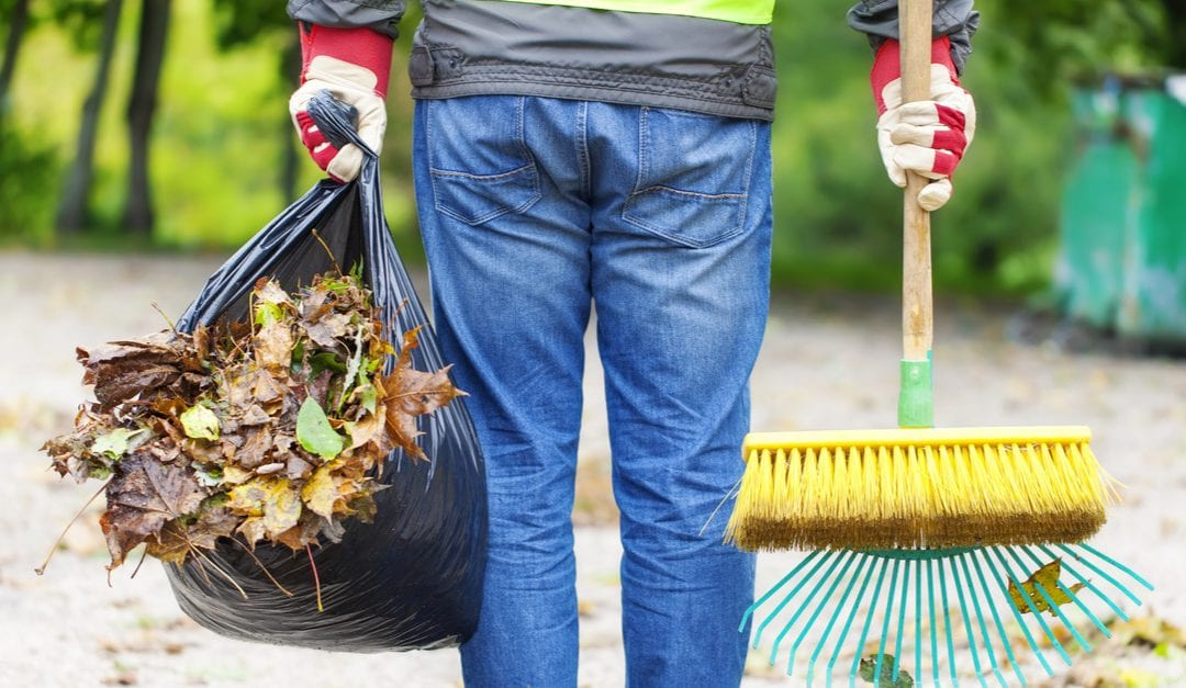 Tips for Proper Yard Clean Up