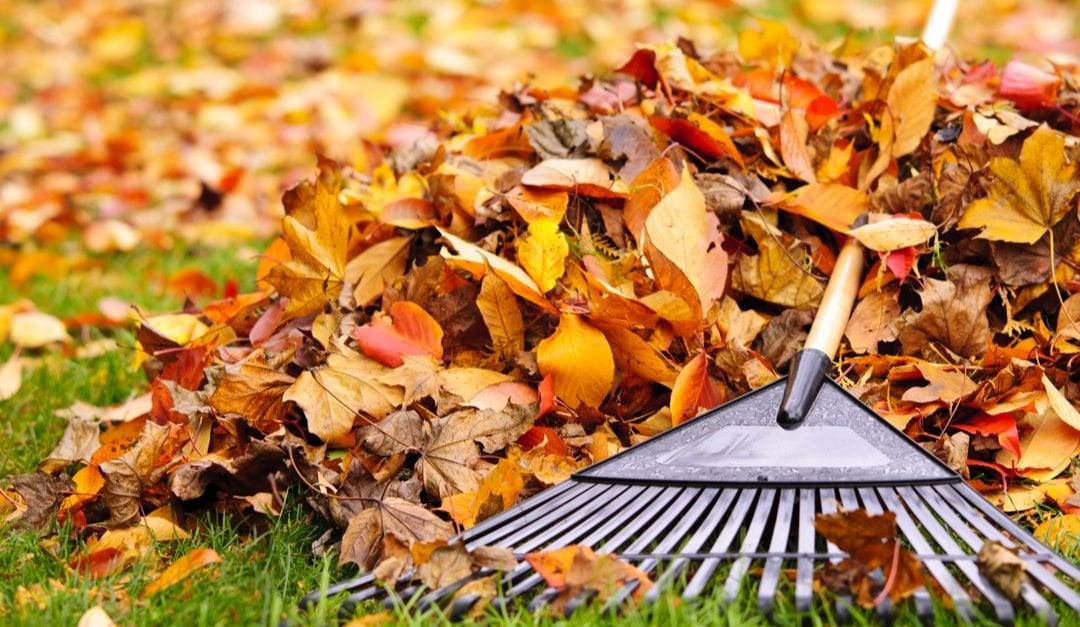 How to Avoid Injuries While Raking Leaves