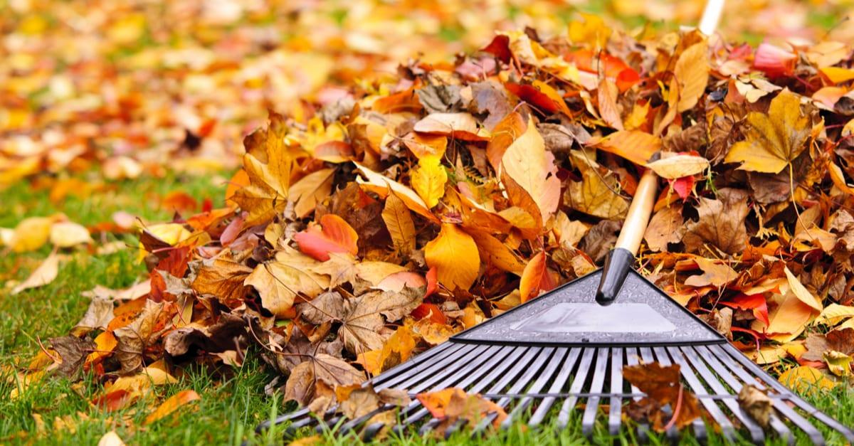 raking leaves fall