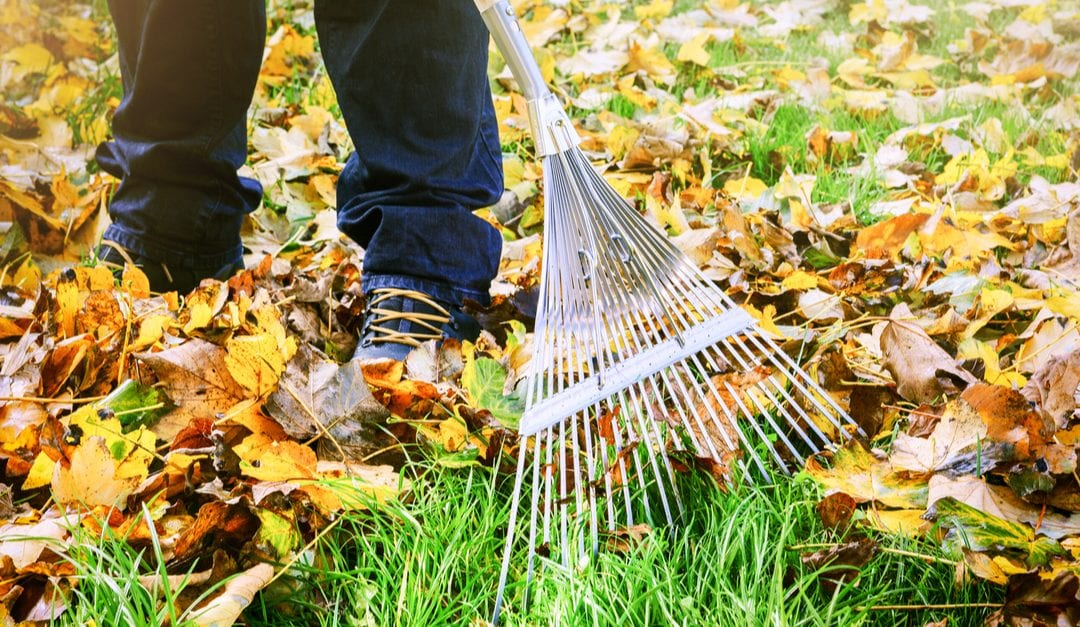 Protect Yourself During Fall Cleanup